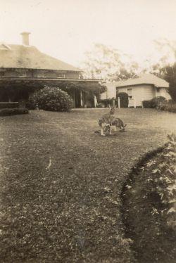 001 Kangaroos Rec Hall